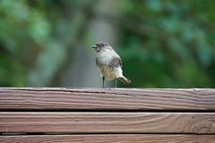 DSC03167-birds