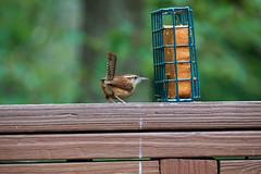 DSC03165-birds