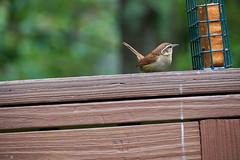DSC03192-birds