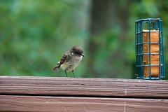 DSC03172-birds