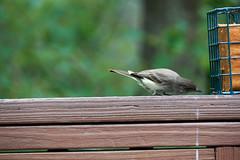 DSC03173-birds