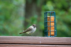 DSC03171-birds