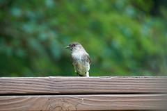 DSC03166-birds