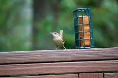 DSC03158-birds