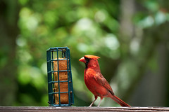 DSC03204-birds