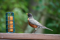 DSC03211-birds