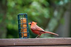 DSC03208-birds