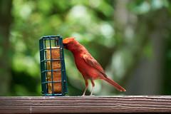 DSC03203-birds