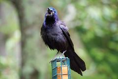 DSC03195-birds