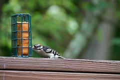 DSC03179-birds