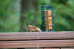 DSC03175-birds