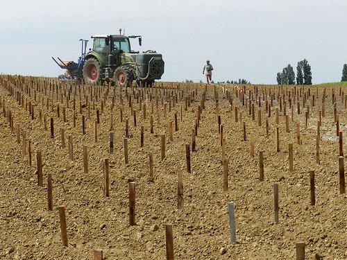 Machine à planter la vigne