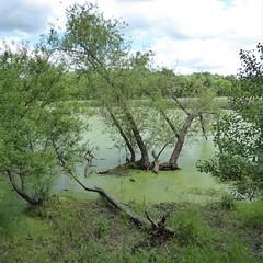 Lincoln Marsh 2020