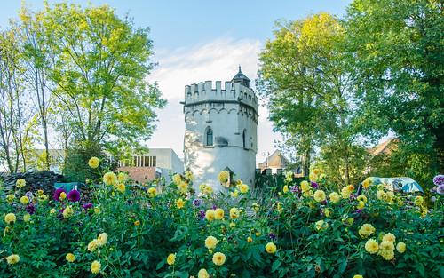 La tour Sainte-Marthe et ses dahlias