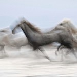 The Charge by Colin Brister
