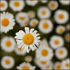 Best Floral
