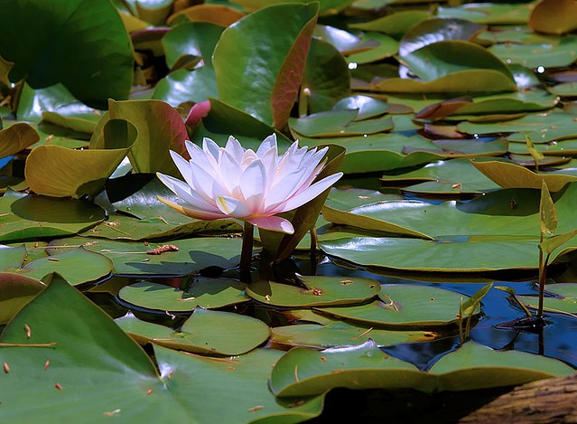 Photo:Pink Water Lily By ☼☼Happy Autumn☼☼