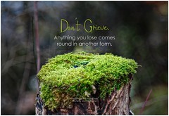 Rumi Don't grieve. Anything you lose comes round in another form