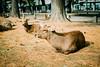 Photo:Nara Park By hans-johnson