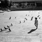 The Birds  (Retina IIIC  /  Tri-X)