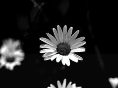 Gartenzauber - Garden magic