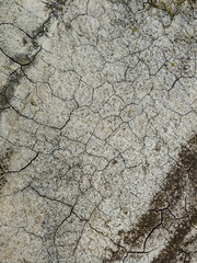 Grey Patterns Of Old Cracked Floor