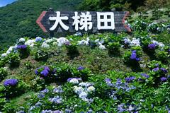 竹子湖觀光花園