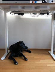 Kabelmanagement und Bürohund (engl. Office Dog)