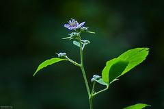 Fleur de Ronce - Photo of Puiseux-en-Retz