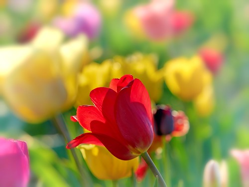 A bit of Color and Sunshine for my Friends