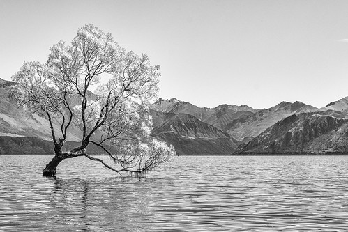 Wanaka Tree, Lake Wanaka, New Zealand - 5649