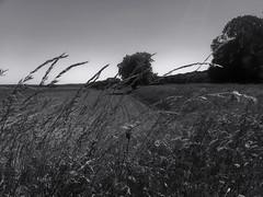 Videlles (Essonne)