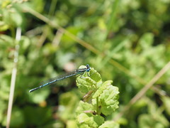 Dragonfly - Photo of Chilly-Mazarin