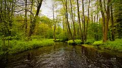 Surzhitsa creek