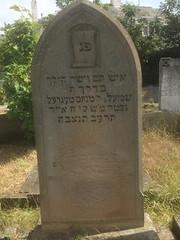 Samuel Stein