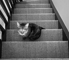 Mon chat dans l'escalier