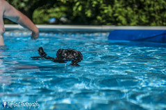 dogs in pool