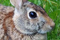 Chipmunks, Rabbits, Raccoons & Squirrels