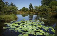 Meadowlark Botanical Gardens - Vienna Virginia