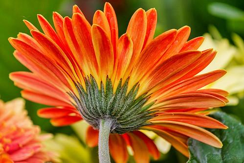 un raggio di fiore - a ray of flower
