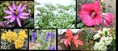 Flowers of  Los  Rios