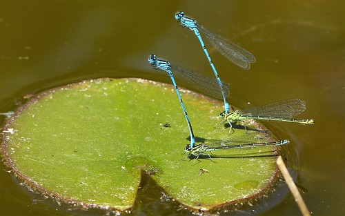 Synchronously mating
