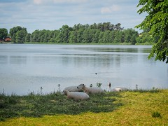 Idyll at the lake - on the way to the fisherman | June 9, 2020 | Bornhöved - Schleswig-Holstein - Germany