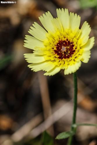 Sun-crowned