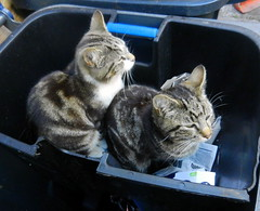 William and Charles in the paper recycling pod.