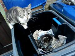 William joining Charles in the paper pod of the recycling bin.