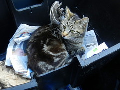 Charles in the paper pod of the recycling bin.