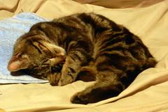 Charles sleeping, hugging is back paw.