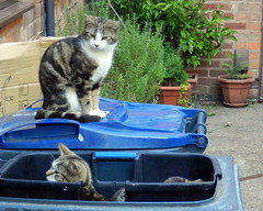 Edward looks on with distain at is brothers' antics in the recycling bin.