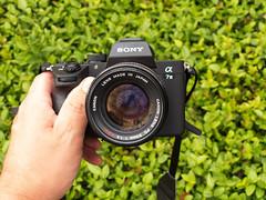Sony a7iii w/ Vintage Lens: Canon 50mm F1.4 FD mount